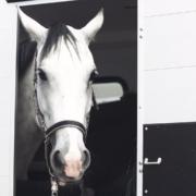 "alt=""imagefilm Hetze horses"""